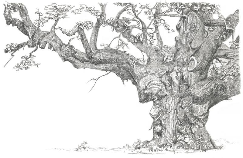 Major Oak (2).tif